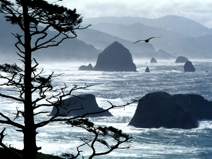 Ecola Point, Oregon Coast