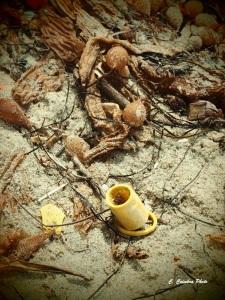 Plastic washed ashore.
