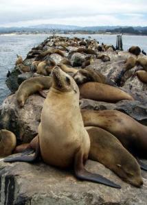 Sea Lion photo courtesy of Gerick Bergsma 2011/Marine Photobank.
