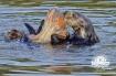 otter in plastic bag