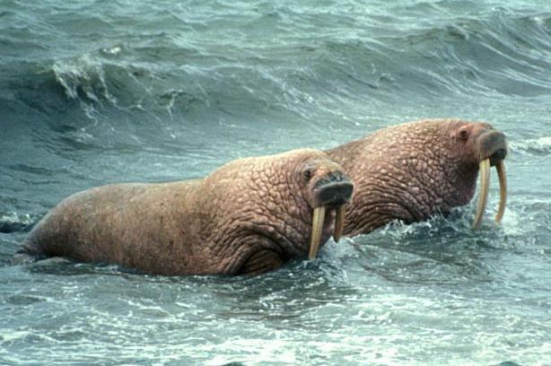 U.S. Fish and Wildlife Service photo
