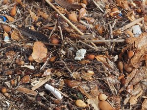 Plastics captured by washed up kelp on the beach.  C. Coimbra photo