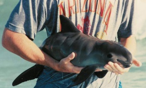 http://conbio.org/groups/sections/marine/save-the-vaquita