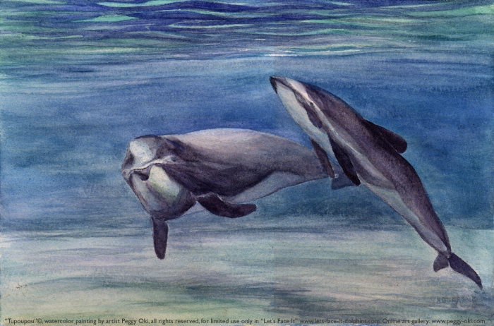 Maui Dolphin art from http://www.lets-face-it-dolphins.com