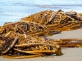 """Kelp is a game-changer,"" said Bren Smith, owner of the Thimble Island Oyster Co.  C. Coimbra photo"