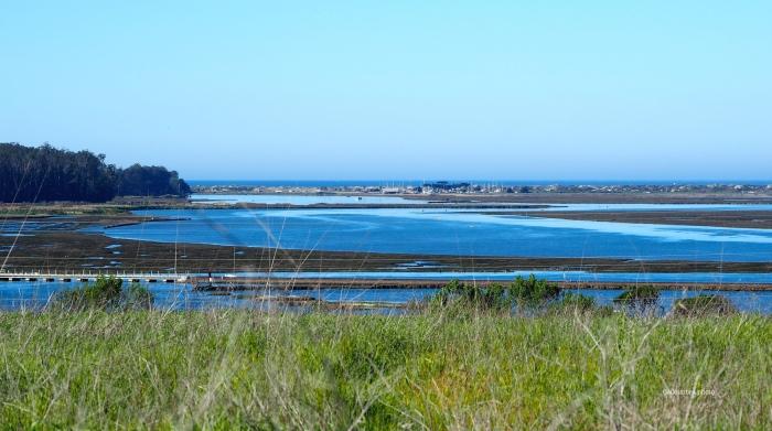 Elkhorn Slough looking toward Monterey Bay