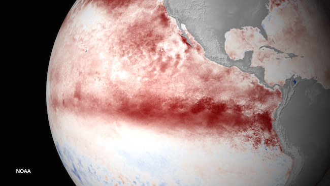 Unusual warm water spread in the Pacific Ocean.  (NOAA photo)