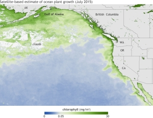 Average chlorophyll concentrations (in milligrams per cubic meter of water) in July 2015. The darkest green areas have the highest surface chlorophyll concentrations and the largest amounts of phytoplankton—including both toxic and harmless species. (NOAA Climate.gov map based on Suomi NPP satellite data provided by NOAA View.)