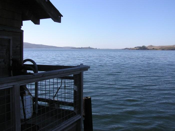 Tamales Bay. C. Coimbra photo