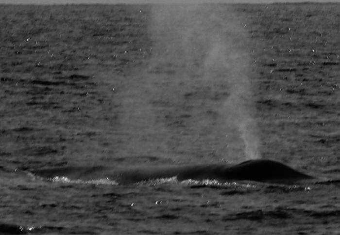 B. Whale 5