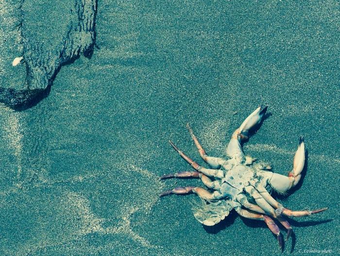 Dead Crab w:sig.jpg