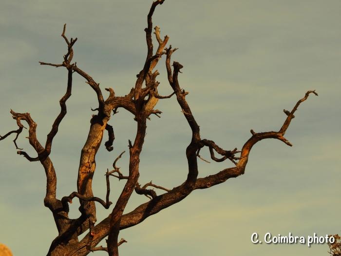 dead tree w/sig
